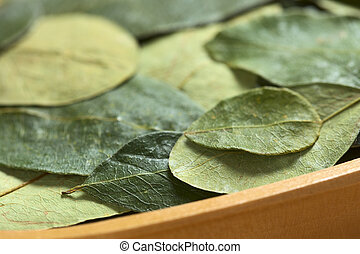 Dried coca (lat. Erythroxylum coca) leaves in a wooden bowl. In Peru coca leaves are drunk as tea and they are traditionally chewed in the mountains to help against altitude sickness (Selective Focus,