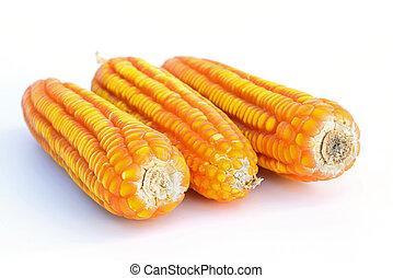 Dried corn closeup on a white background
