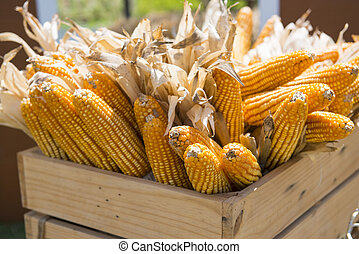 dried corn in the basket