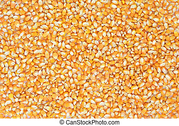Dried corn kernels background. Beautiful texture.