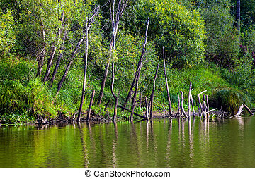 Dried dead trees on the river bank
