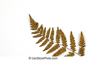 Dried fern detail on white
