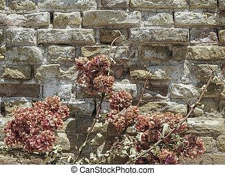 dried flower against brick wall