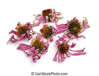 Dried flowers Echinacea purpurea (eastern purple coneflower...