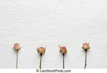 Dried flowers of roses on a white paper. pink. yellow