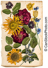 Dried flowers on aged paper sheet. Lavender, roses, sunflowers