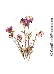 Dried Flowers white background