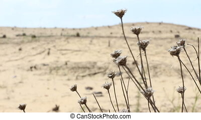 Dried grass in the desert