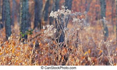 Dried grass stick under the sun beam Autumn dry grass