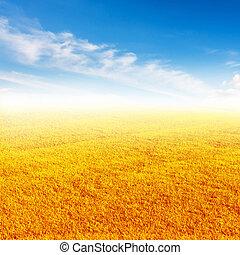 Dried grass with blue sky