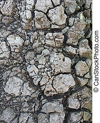 dried ground covered with cracks.