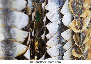 Dried hanging fish. Taranka. Fish Market