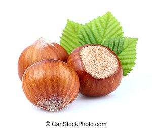 Dried hazelnuts with leaf