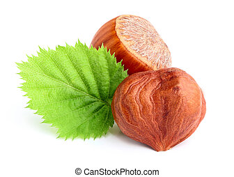 Dried hazelnuts with leaves.