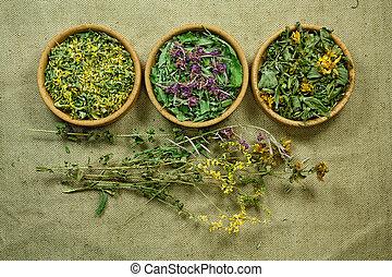 Dried. Herbal medicine, phytotherapy medicinal herbs. - ...