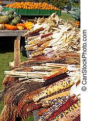 Dried Indian Corn on Display on a Farm