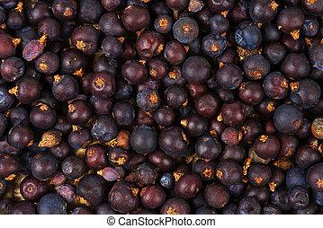 Dried Juniper Berries background