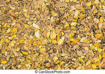 Dried leaves for nature background