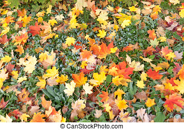 Dried leaves in fall