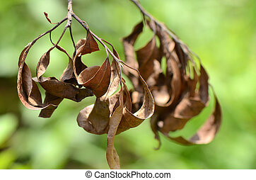Dried leaves.