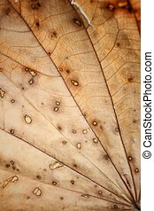 Dried leaves
