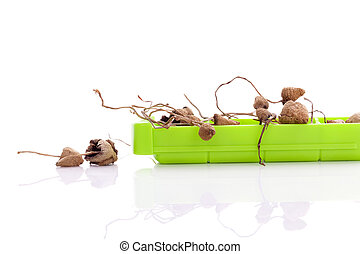 Dried Medical mushrooms