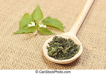 Dried nettle on wooden spoon and fresh plant - Heap of dried...