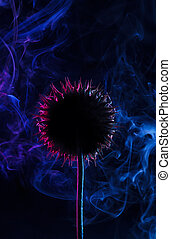 Dried Onopordum flower - Experimental photo of dried ...