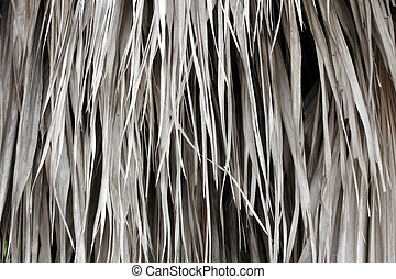Dried Palm Fronds