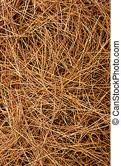 dried pine leaves needles pattern background