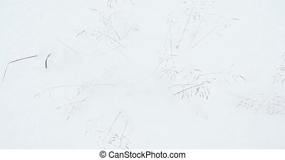 Dried plants sticking out of the snow and shaking in the...