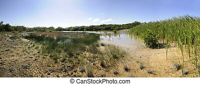A view of tropical mangrove vegetation on semidried pond