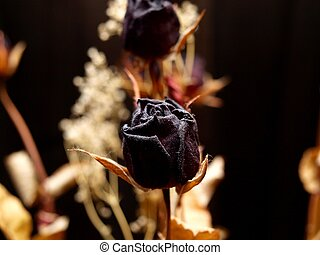 Dried red flower - Dried red rose