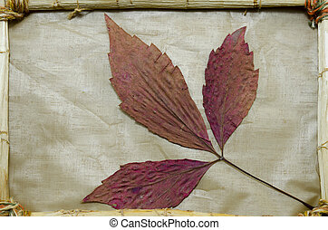 Dried red leaves in a vintage frame