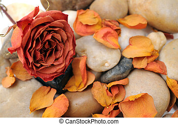 dried rose and stone