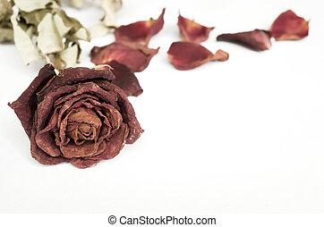 Dried rose, Dead rose