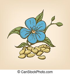 Dried seeds of golden flax with flowers. Vector illustration. Hand drawn illustration.