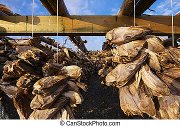 Dried stock fish in Norway