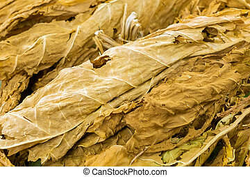 dried tobacco leaves close up background