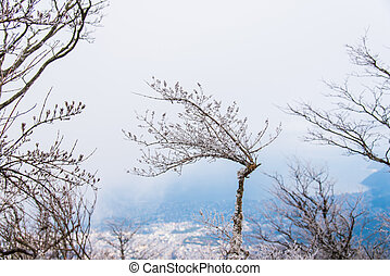 Dried tree with snow