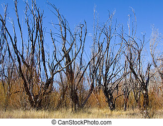 Dried Trees II