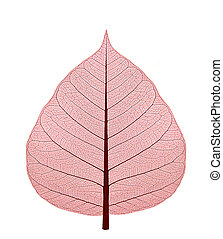 Dried up leaf with red shade on a white background