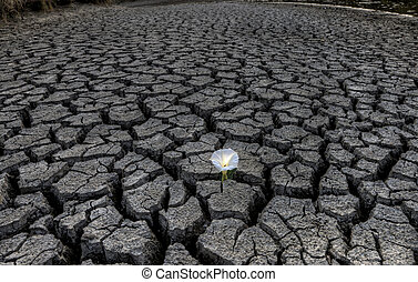 Dried up River Bed and flower