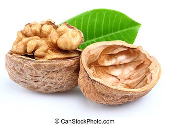 Dried walnut with leaf