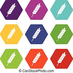 Dried wheat ear icon set color hexahedron