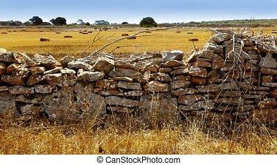 Dried wheat grass in Formentera