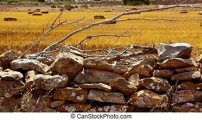 Dried wheat grass in Formentera Balearic island from masonry...
