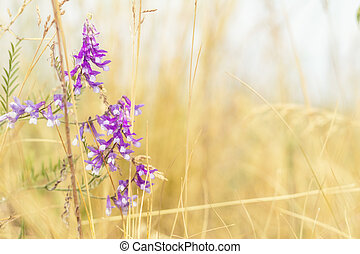 Dried yellow grass and gentle blue flowers in the field on a sunny day. Shallow depth of field