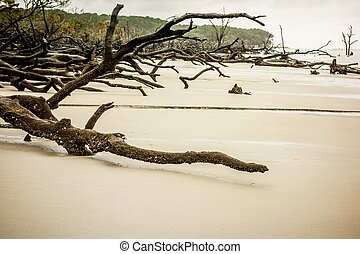 drift wood on hunting island south carolina