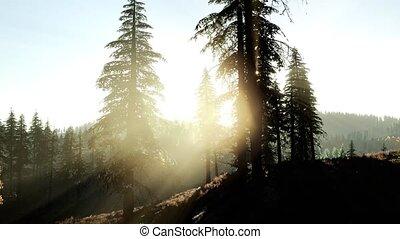 drifting, manhã, cedo, luz, árvores, nevoeiro, através